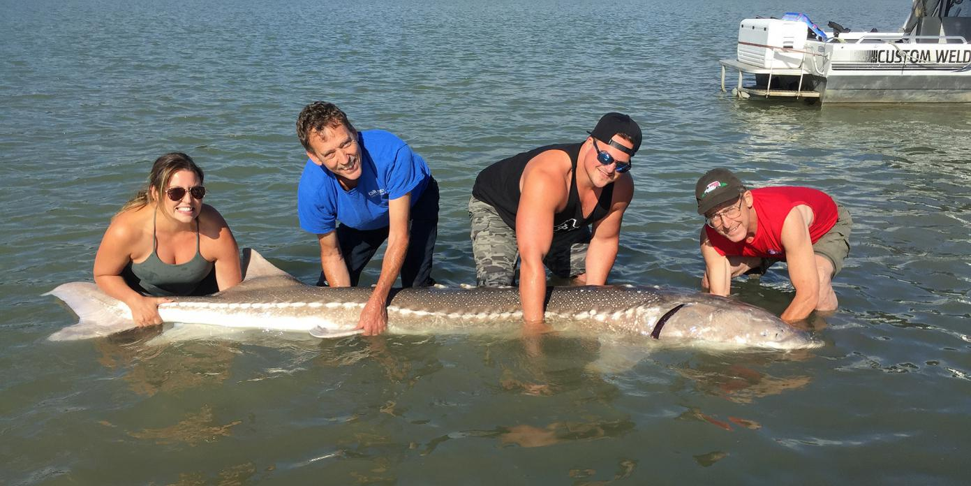 Name:  giant-sturgeon-fraser-river-bc-IMG_4995.jpg Views: 993 Size:  152.1 KB