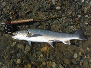 Name:  Pacific-Angler_Greg_bulltrout-trout.jpeg Fishing report pic.jpg